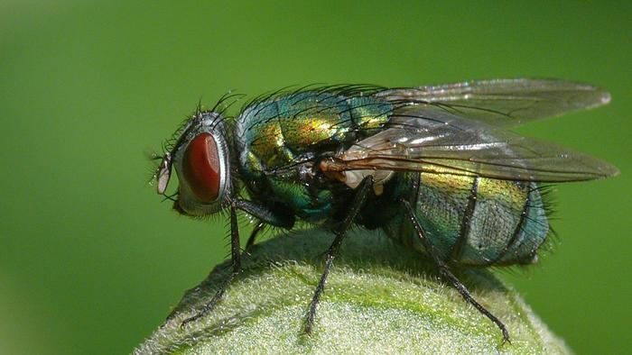 Home Remedies to get rid of Flies